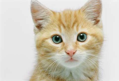 ความเชื่อเกี่ยวกับแมว20%..20%เมี้ยวววว